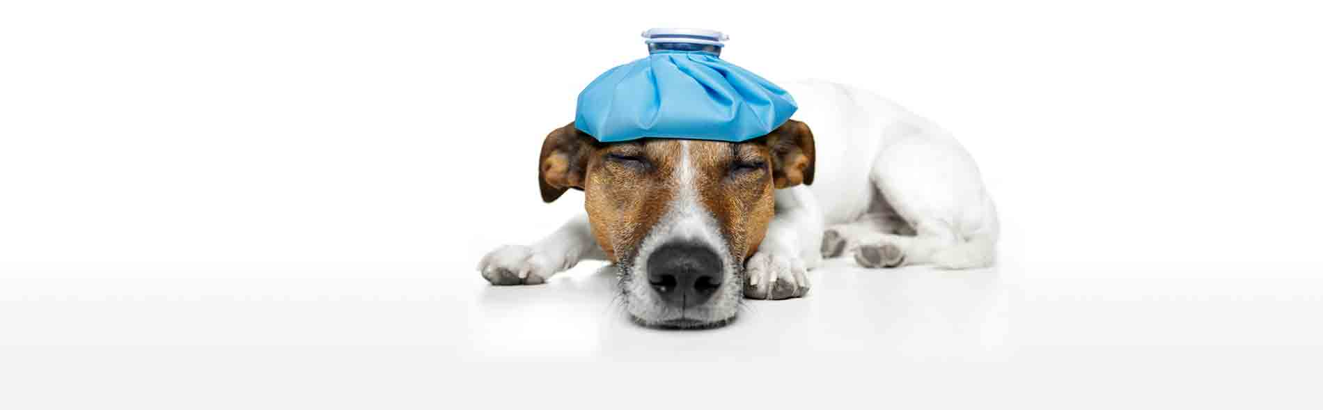 EXAMINATIONS TO DIAGNOSE AND TREAT DISEASES IN SICK OR INJURED ANIMALS