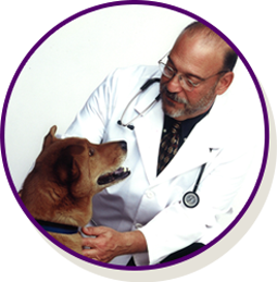 doctor and dog